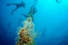 Divers2