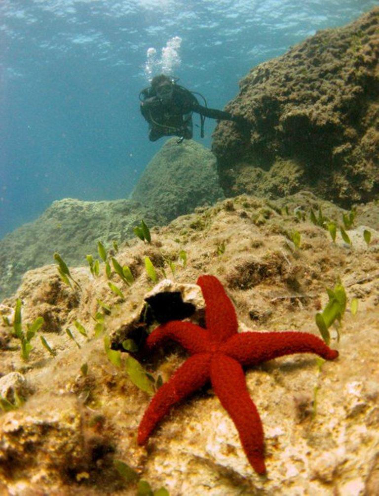 Fish_Star2