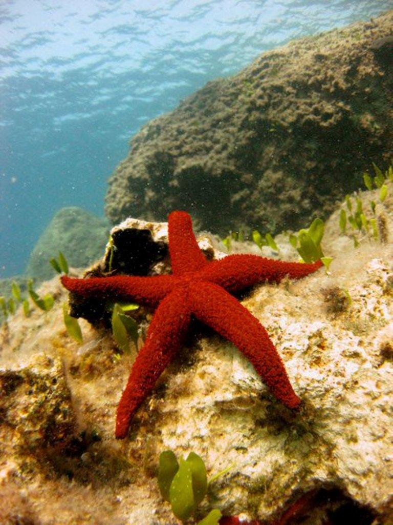 Fish_Star3
