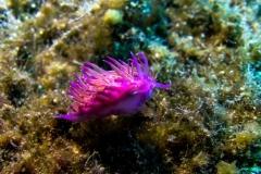 Fish_Nudibranch